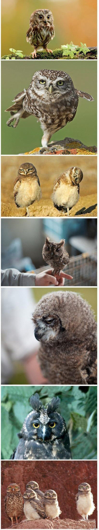 Owls are my favorite animal ever they can look super cute, or really fierce or…