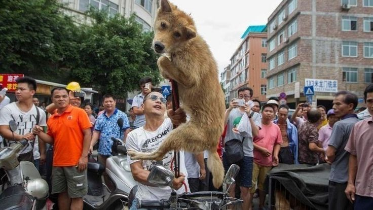 World Animal Protection: Stop Yulin Dog Meat Festival