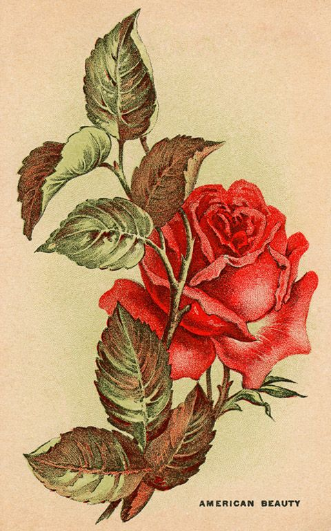 flower illustration vintage, it would make a great tattoo