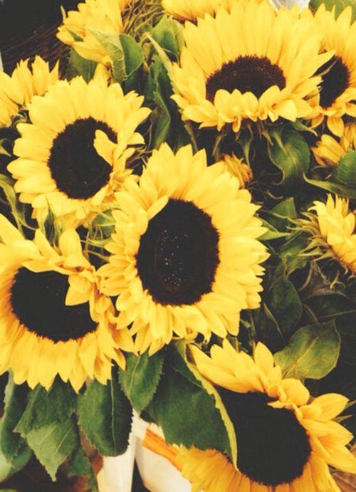 ...Sunflowers...