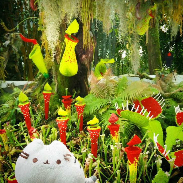 Pitchers & Venus Flies.. So which one of you is real? #pusheen #pusheentravels #gardensbythebay #gardensbythebaysingapore #cloudforest #legoplants #lego #pitcherplant #venusflytrap #wildnature #itsajungleoutthere #プシーン #ガーデンバイザベイ #胖吉貓 #滨海湾花园 by pusheen_travels