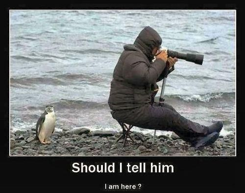 Does anyone know the source for this photo?: Funny Things, Funny Pics, Funny Pictures, Funny Stuff, Humor, Funny Penguins, Funny Animal, Smile, Photo