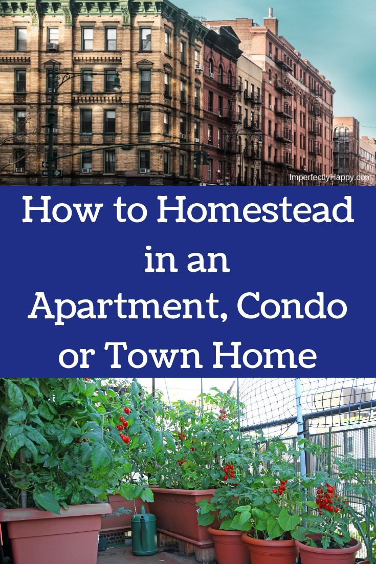 How To Start Your Homestead Venture In An Apartment Condo Or Townhome You Can Homesteading Anywhere