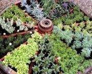Dicas para plantio de ervas aromáticas em canteiros