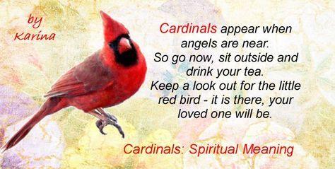 Cardinals Spiritual Meaning Symbol Of Cardinal Birds