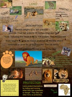 The lion is one of the big cats in the genus Panthera and a member of the family Felidae. The commonly used term African lion collectively denotes the several subspecies found in Africa. #glogster #glogpedia #lions