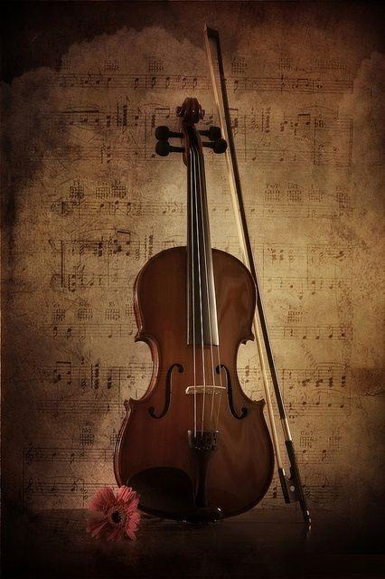 Geige - Violine / Violin + Musik Instrumenten / Musical Instruments