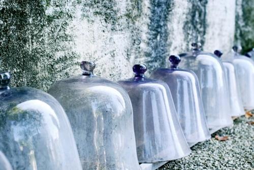 Indoor Plants Geelong