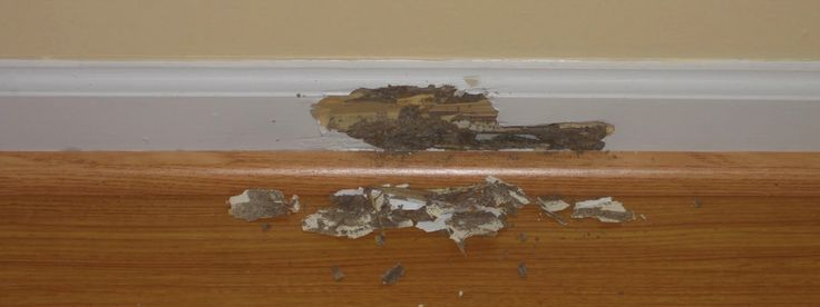 How To Check Sign Of Termites Infection? #termites #home #pest #pestcontrol
