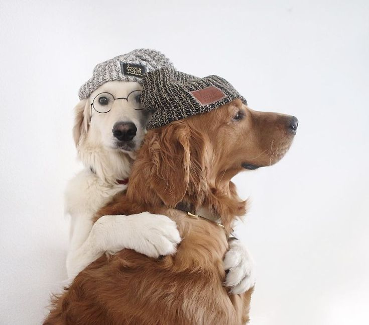 Best Friend-Dogs And A Cat Are Taking Over The Internet With Their Incredibly Adorable Pics