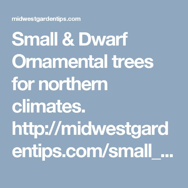 Small & Dwarf Ornamental trees for northern climates. http://midwestgardentips.com/small_trees_.html