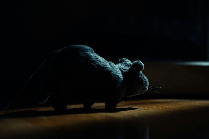 쥐의 뒷모습