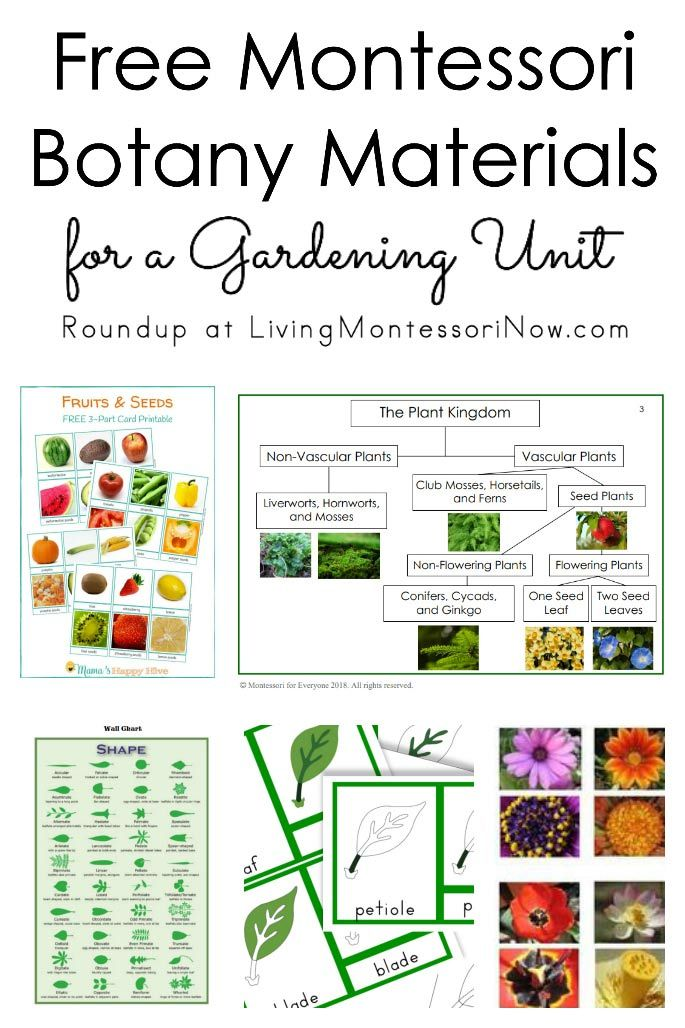 2037 best diy montessori activities images on pinterest roundup of free botany materials for homeschools and classrooms free plant printables for a variety fandeluxe Images