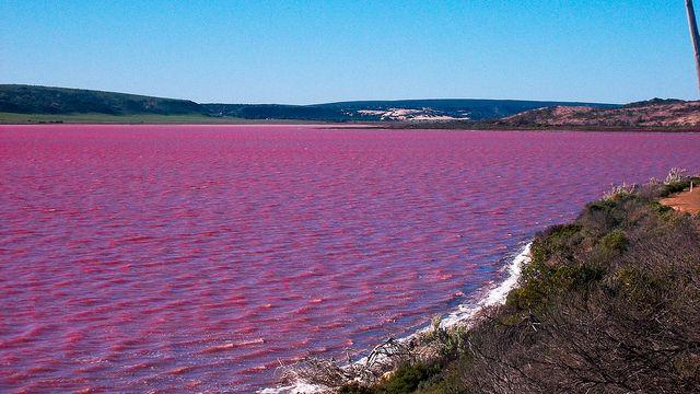 hutt lagoon violet water.jpg