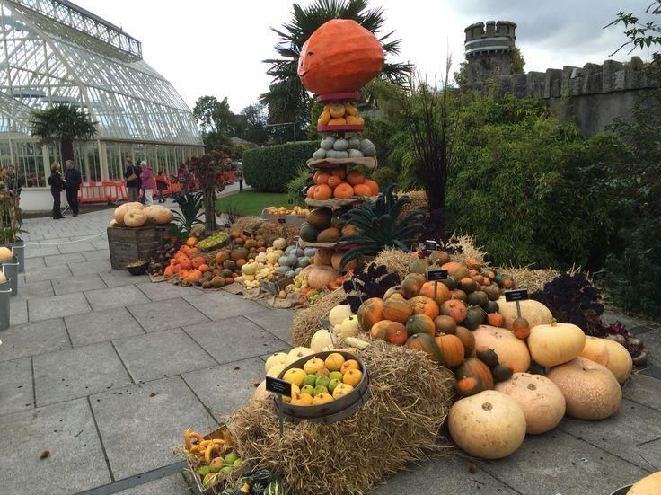 Pumpkin display, Botanical Gardens, Glasnevin