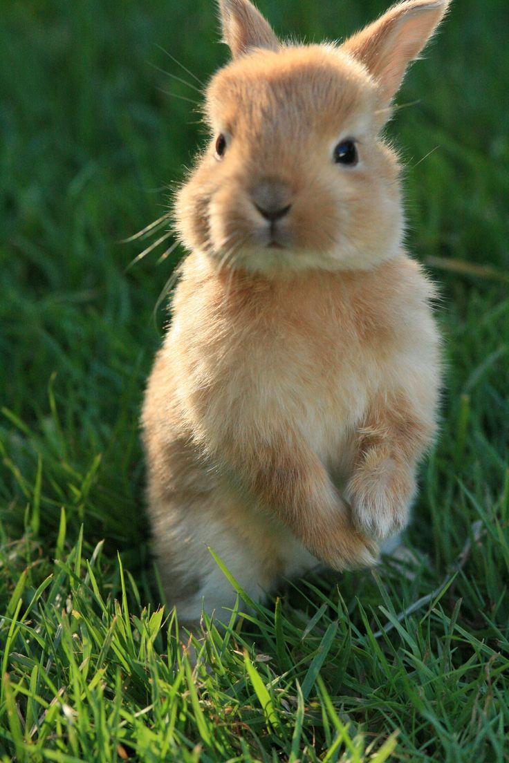 best 25 baby bunnies ideas on pinterest cute bunny bunnies and bunny. Black Bedroom Furniture Sets. Home Design Ideas