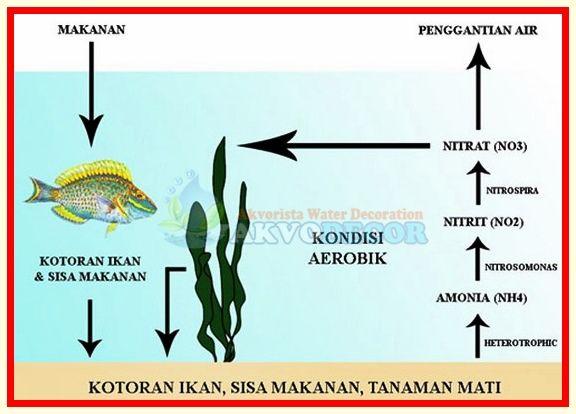 Menghilangkan Nitrat Pada Akuarium Air Laut   Nitrat adalah suatu zat kimia yang ada dalam bumi ini dan akibatnya sangat fatal terutama pada akuarium air laut jika anda tidak menghilangkan nitrat pada akuarium air laut ini dengan segera. Nitrat ini tidak baik untuk kesehatan air dan ikan anda, secara keseluruhan kesehatan isi akuarium itu sendiri.  Selengkapnya: http://akvodecor.com/menghilangkan-nitrat-pada-akuarium-air-laut/
