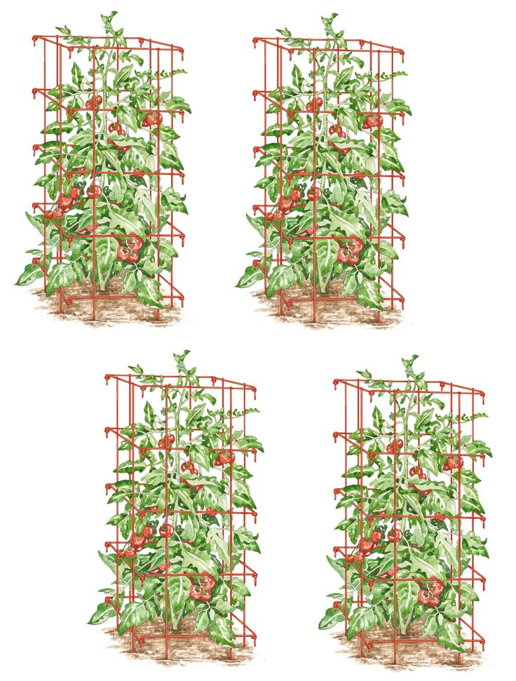 """Tomato Cages, Set of 4: 14 3/8"""" square x 39"""" H including 7"""" legs (32"""" H installed), 8"""" square openings, $49.95 