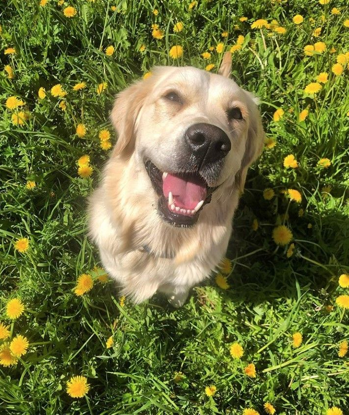 125 Human Names For Male Dogs Dog Names Male Dogs Best Male Dog Names