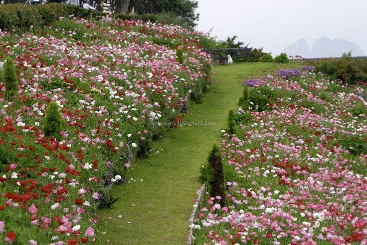 Goeje Korea - The beautiful Venus Garden of Oedo Paradise Island  #southkorea #asia #korea #goeje #tongyeong #seaport #island #city #history #culture #experience #travel #traveltherenext #oedo