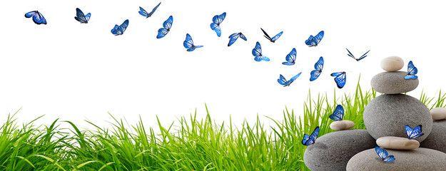 Très beaux papillons bleus volant au-dessus de rochers