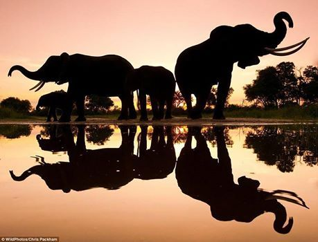 Please support the Global March for both Elephants and Rhinos starting at Makro, Nelspruit at 11am on 4 October 2014.....WESSA Lowveld is proud to be coordinating this event...create awareness....make a difference!