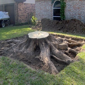 How to Remove a Tree Stump #homestead #remove #tree #stump