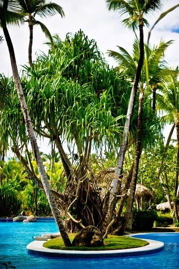 resort pool, planter, white coping, palm trees, dark blue waterline tile