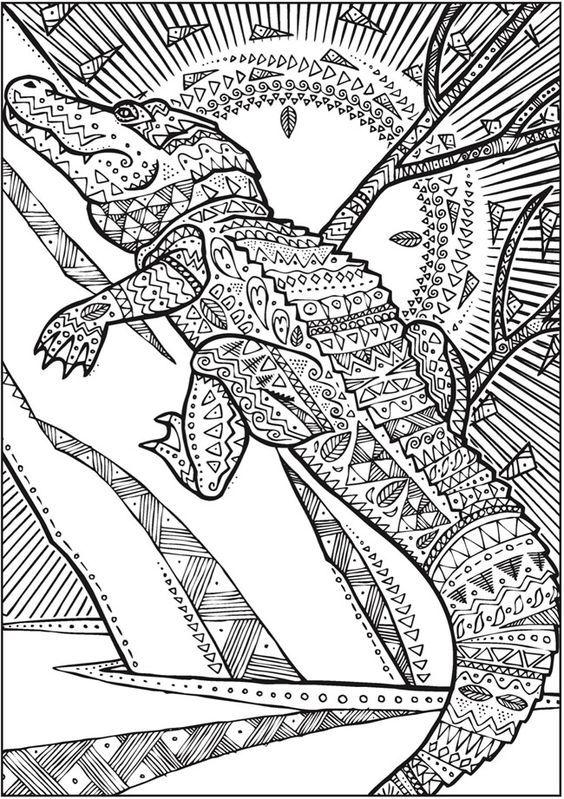 Mejores 53 imágenes de cocodrils en Pinterest | Cocodrilos, Reptiles ...