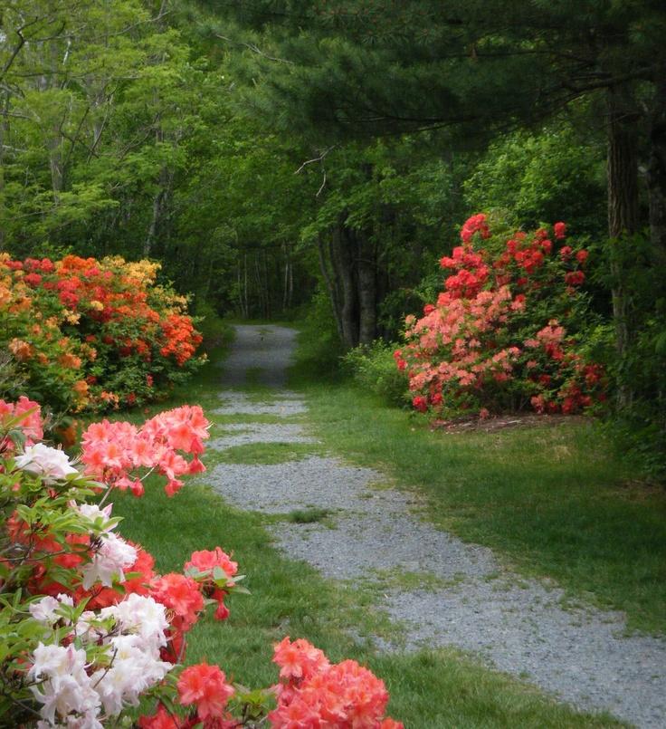 Pine Grove Park, Liverpool, Nova Scotia