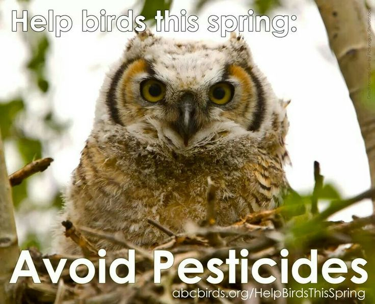 Happy Earth Day! Say no to pesticides in your home and garden.