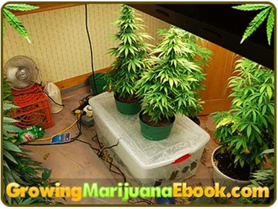 Homemade hydroponics system growing weed crazy homemade for Indoor gardening for dummies