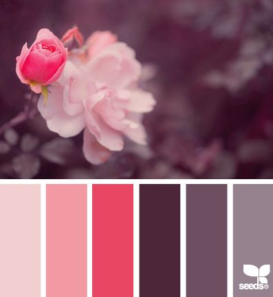 Palette inspired by pink gray flower