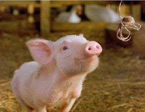 Today is National Pig Day, always on March 1st. Celebrate with snort offs or  pig outs.