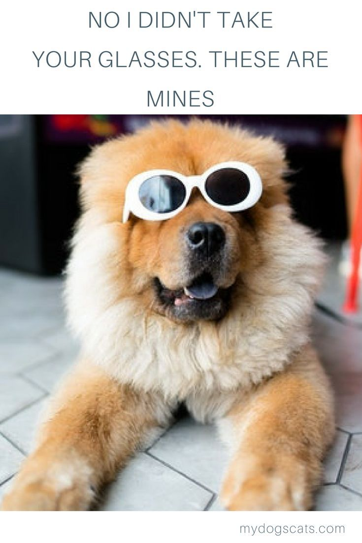 41235682be9 Does your dogs wear glasses      dog  dogs  doglovers  glasses  memes   dogquotes  funnydogs  fun  funnymemes