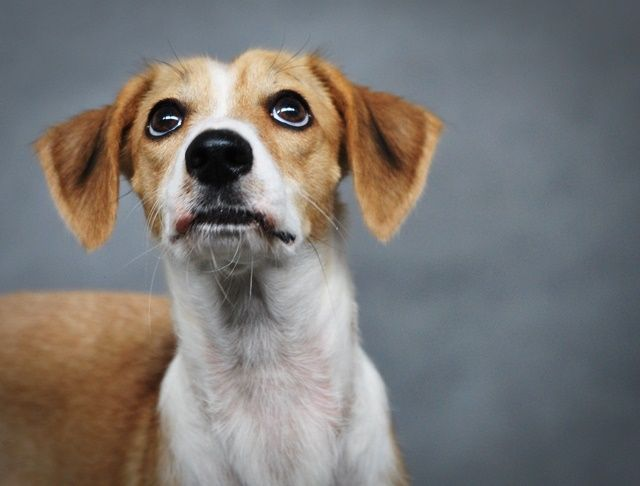 Mokka do adopcji :) #psy #adopcje #schronisko #pomoc #polska #dogs #adopt #shelter #help #poland