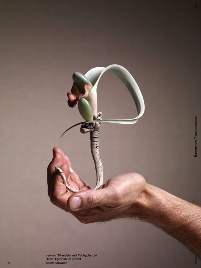 Manipulated plant / live sculpture. source: provider magazine transgender transformations - photo wendelien daan