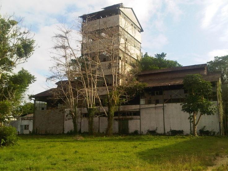 Plantage Mariënburg  Suriname