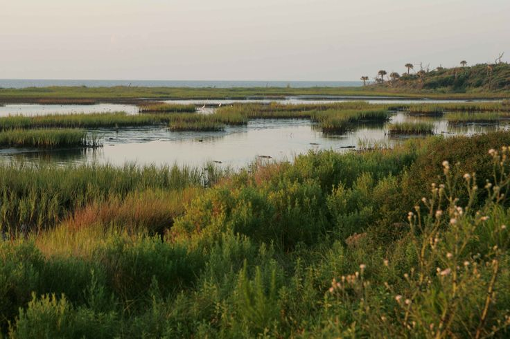 Image result for marshland