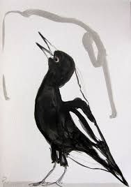 Image result for australian magpie drawing