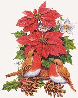 oiseaux avec fleurs de Noël