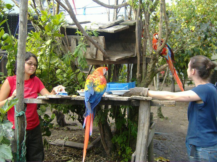 The Amazon Rescue Center welcomes volunteers to help with the center's day-to-day tasks. This often includes work on existing projects but volunteers can also assist with new ones. Some of the specific projects which volunteers can make happen include developing new environmental awareness programs in the local schools and building new islands as fenceless sanctuaries for the animals. http://www.lead-adventures.com/Amazon-Details/