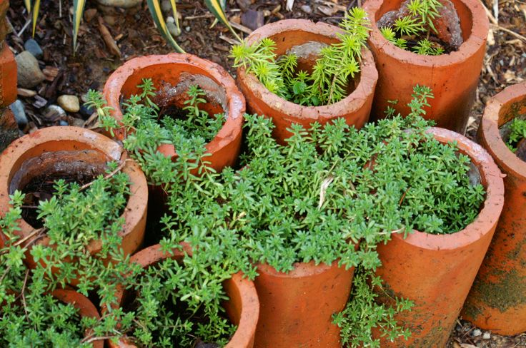 I've seen pictures of terra cotta drainage tiles used to plant succulents.  If I find a better picture I'll pin it.