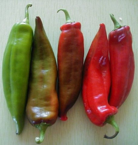 Pepper: Anaheim Chile Hot (500mg, 80 seeds)