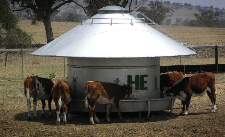 Cattle Feeder -SR