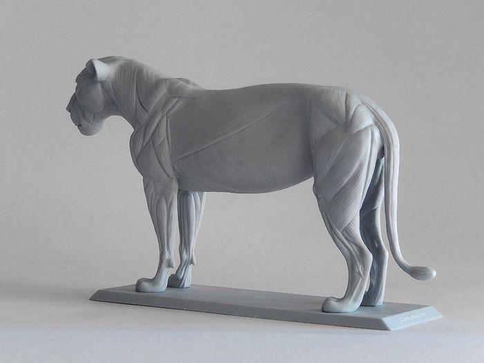 Big Cat Anatomy Sculpture - Lioness by Gabriele Pennacchioli — Kickstarter