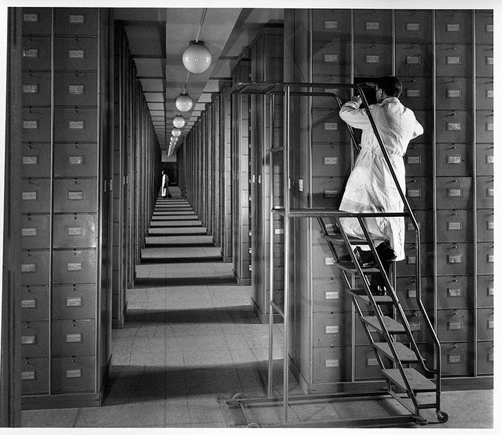 Reportage au muséum national d'histoire naturelle de Paris essentiellement réalisé en 1942 et 1943 - avec des ajouts plus récents en 1990