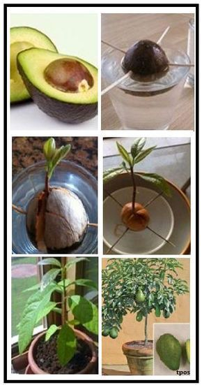 Tolle Ideen die jeder Gartenliebhaber wissen sollt…