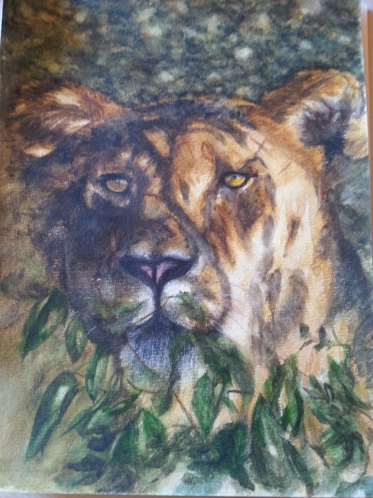 Lioness in water colour by Gayner Vlastou