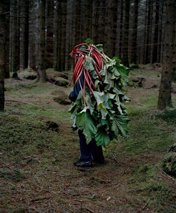 riitta ikonen, contemporary photography, now I want to wear rhubarb like a cape.
